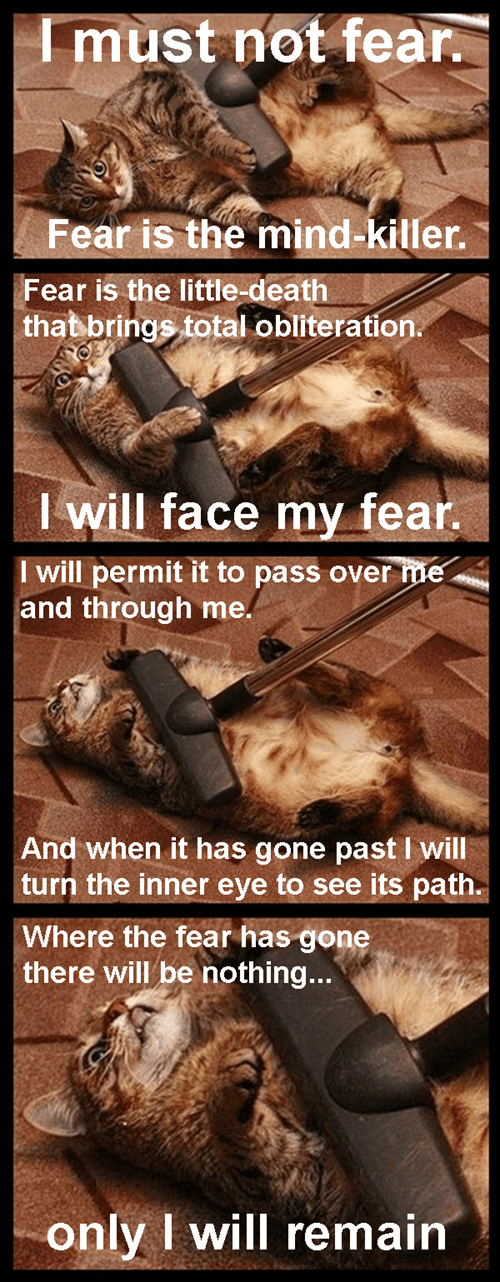 A Cat's Courage