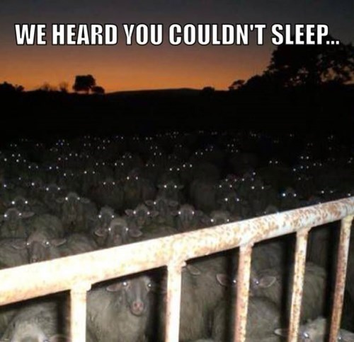 scary sheep sleeping - 8224598784