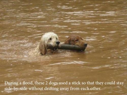cute dogs friends - 8224636928