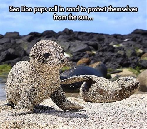 cute sand seals - 8224662784
