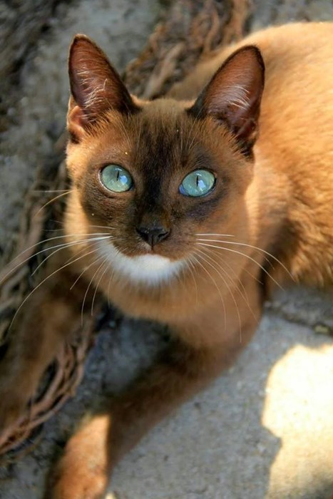 Cats cute eyes