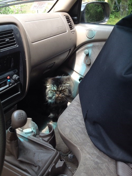 cars,Cats,grouchy,scary,security system