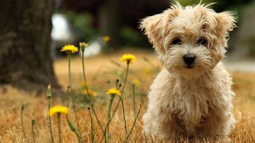 cute flowers puppies