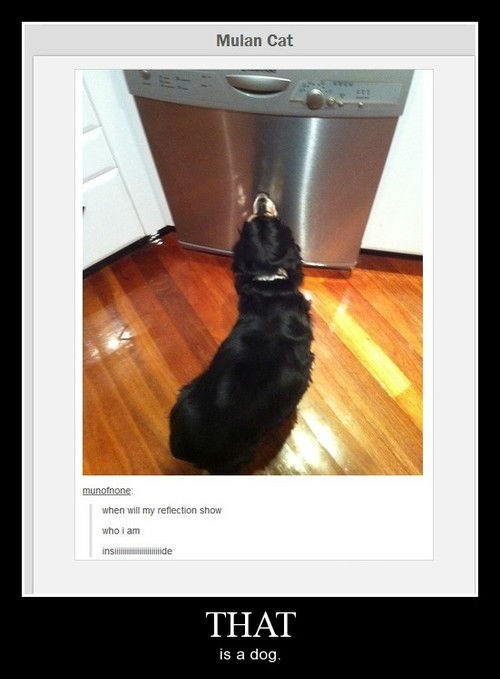 Cats dogs funny mulan - 8224745216