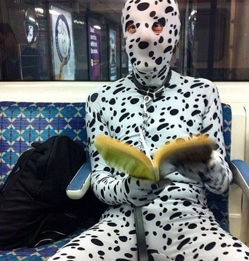 dalmatian,body suit,poorly dressed,spotted