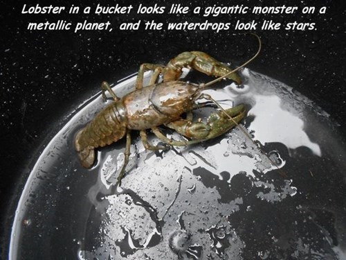 lobster,perspective,illusion,g rated,win