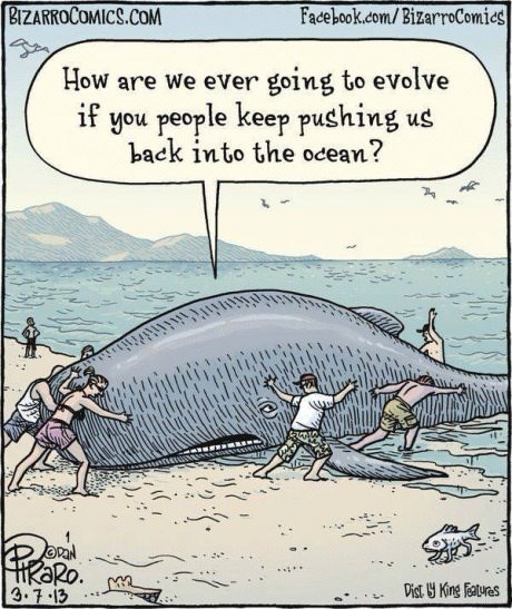 evolution whales web comics - 8225448960