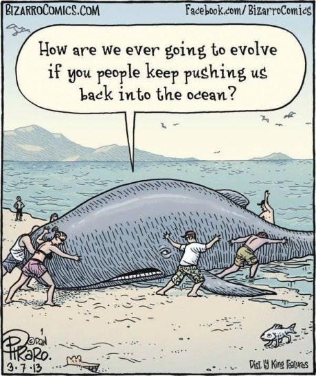 evolution whales web comics - 8225448960