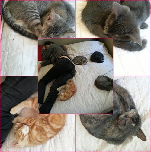 bed Cats funny - 8225468928