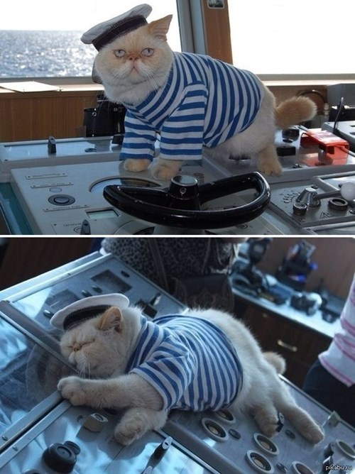 Cats,captain,sailing