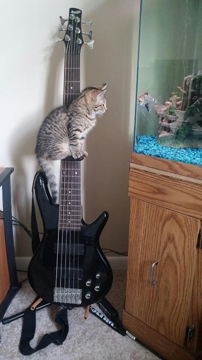 Cats cute bass fish puns - 8225485568