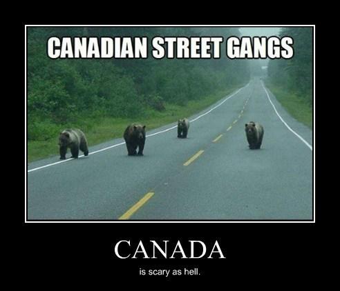 bears,Canada,funny,gangs