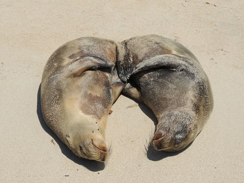 snuggle seals love sunbathing