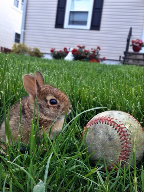baseball bunnies cute - 8225527296