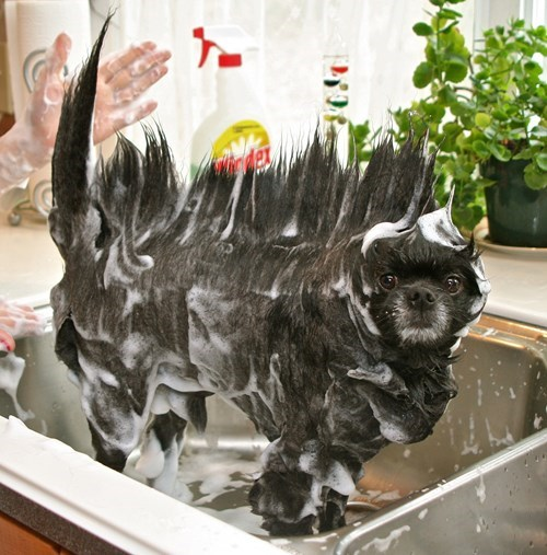 bath dogs grooming - 8225541376