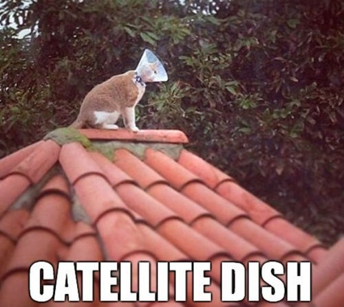 Cats puns satellite dish - 8225567232