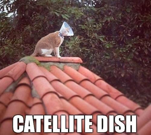Cats puns satellite dish - 8225567232