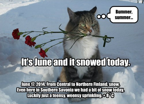 It's June and it snowed today. June 17, 2014. From Central to Northern Finland, snow. Even here in Southern Savonia we had a bit of snow today. Luckily just a teensy, weensy sprinkling. + 8 C Bummer, summer... o