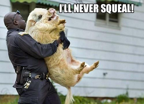 cops,pig,puns