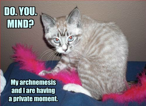 Cats cute snuggle funny wrestle toys - 8225732608