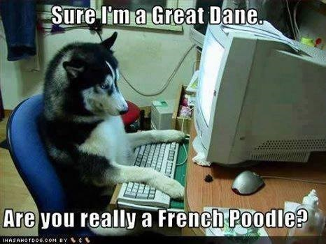 online-dating-sites-for-dogs