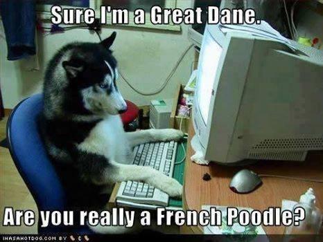 dogs liar jerks funny - 8225825536