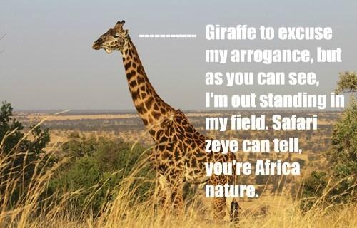 africa giraffes puns - 8225985280
