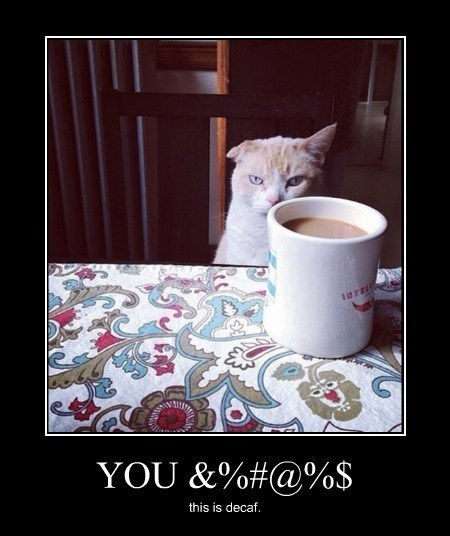 Cats coffee decaf funny