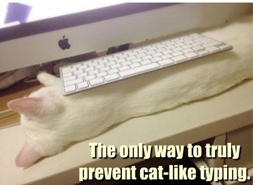 Cats Keyboard Cat typing - 8226804992