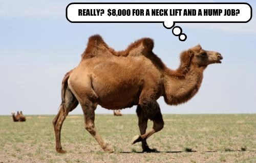 camels plastic surgery - 8226835456