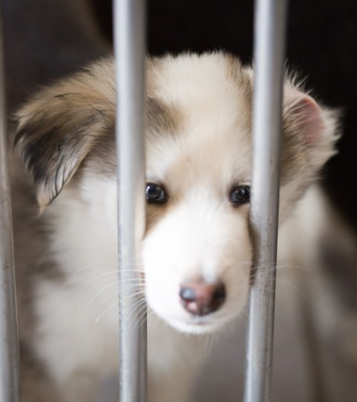 adopt puppies squee - 8226838784