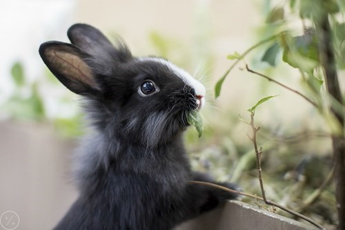 cute bunny salad noms - 8226839808