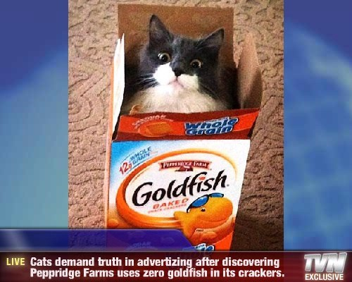advertising Cats boxes funny - 8226854656