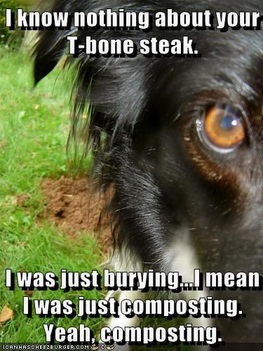 I know nothing about your T-bone steak. I was just burying...I mean I was just composting. Yeah, composting.