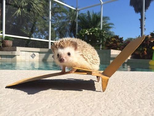 A Spiky Sunbather