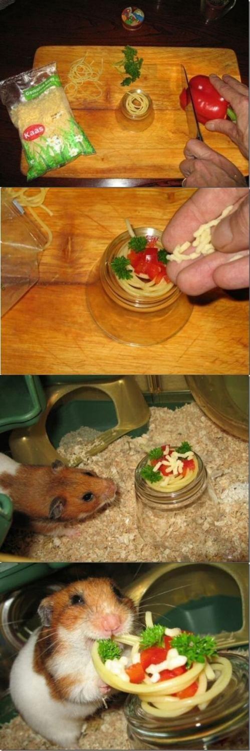 cute hamster noms spaghetti - 8226864384