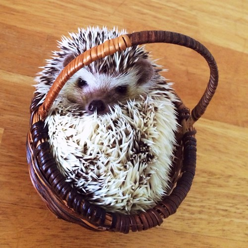 cute,hedgehog,puns,sharpie