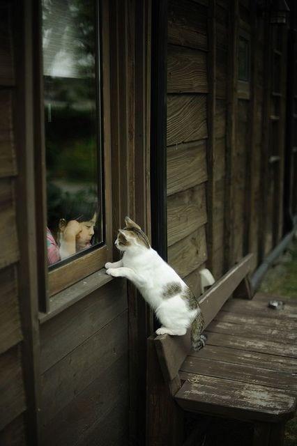 Cats cute kitten playing - 8226868992