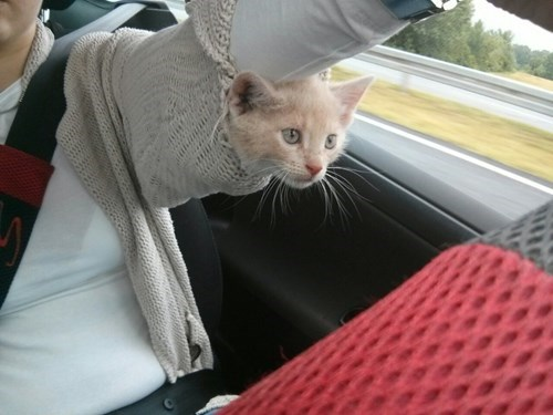cars Cats snuggle funny - 8226903296