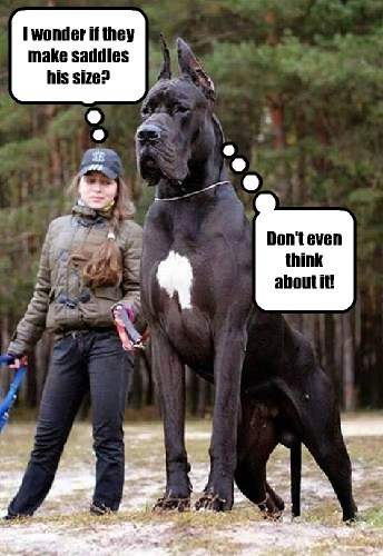 dogs,huge,horses,saddle