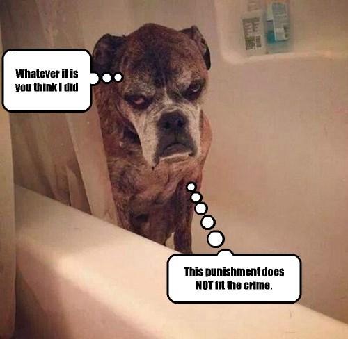 baths dogs - 8227455488