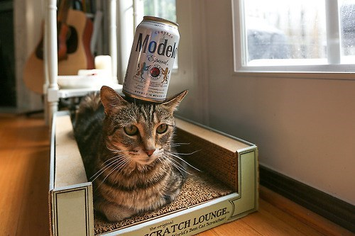 beer,Cats,balance,funny