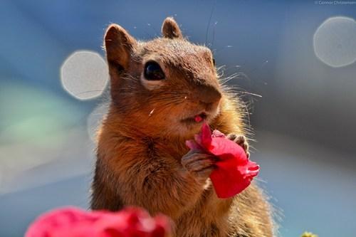 Tasty Flowers