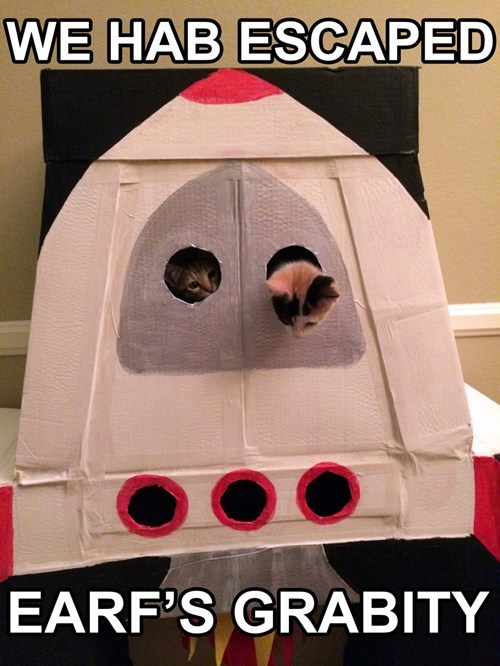 box,Cats,cute,spaceship