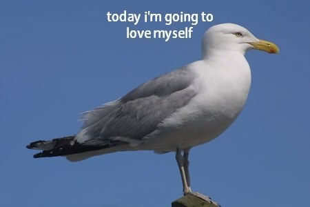 reflection,funny,seagulls,love