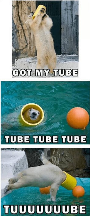 bears,funny,polar bears,tube