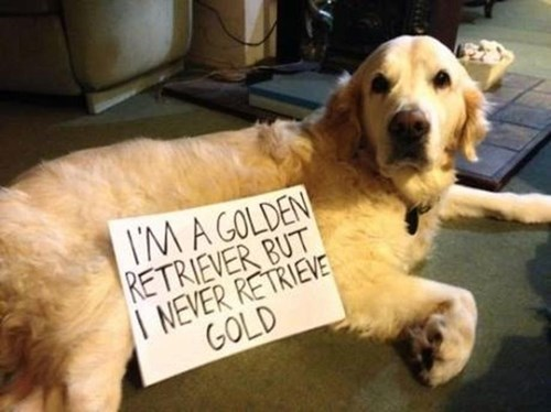 dog shaming false advertising gold golden retriever - 8228453120