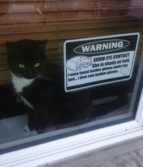Cats funny warning - 8228478720