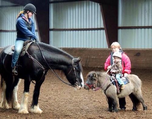 cute kids horses ponies - 8228482304