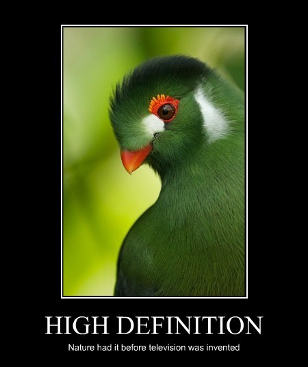 HIGH DEFINITION Nature had it before television was invented